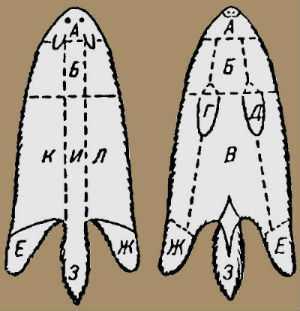 Границы частей на трубчатых шкурах лисицы, волка, корсака, шакала и песца.