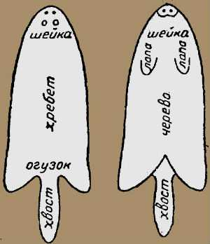 Название участков на шкуре белки (топография шкур)