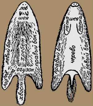Название участков на шкуре трубчатой